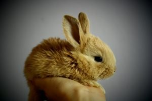 a cute and fluffy bunny