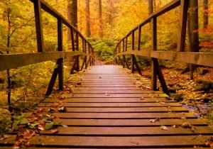a bridge covered in leaves and moving in the fall
