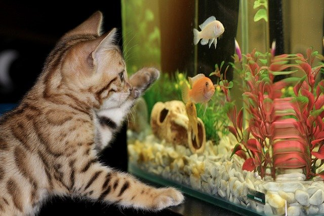 Cat and a fish tank.
