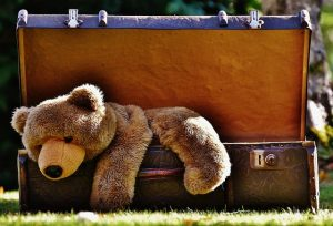 A bear in luggage