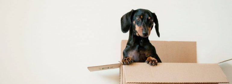 A dog in a box during a move.