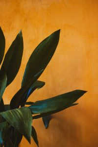 -orange wall