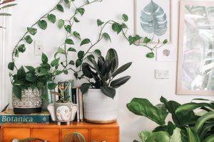 Plants in an office