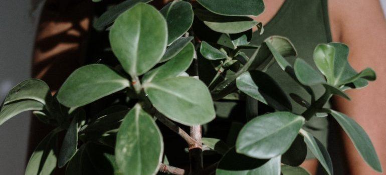 -plant