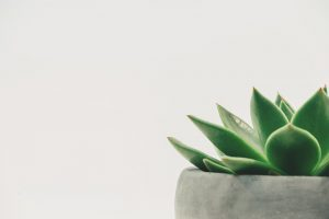 image of a house plant