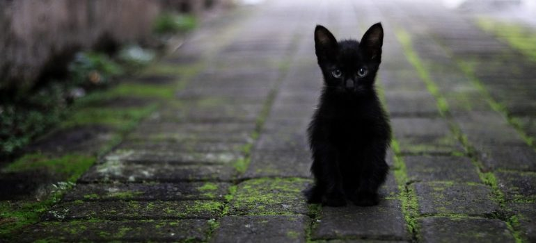 a picture of a black kitten standing outside