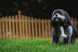 a dog in a backyard