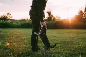 a man petting his dog in the grassy fields in one of the best NJ places for pet owners