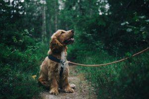 a dog sitting on a hiking trail