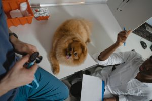 a small dog sitting on the vet table with two vets around him to ensure you have a stress-free move with your pets