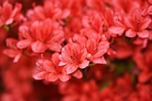 Rhododendron you can see in one of the top NJ places for outdoor activities