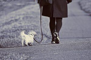 person walking their dog